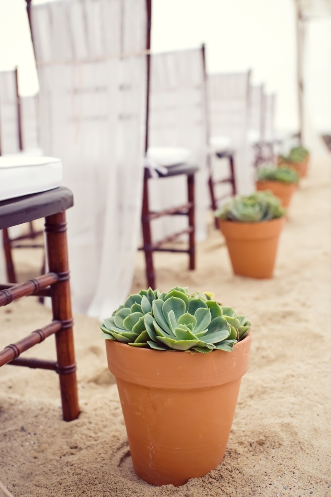 Dazzling Blooms • hace 1 año www.thedazzlingde..., ceremony aisle with pots of succulents